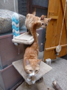 Posing on their scratch post.